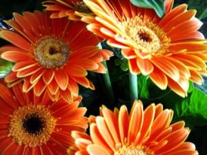 plantas flores paisajismo jardines diseño