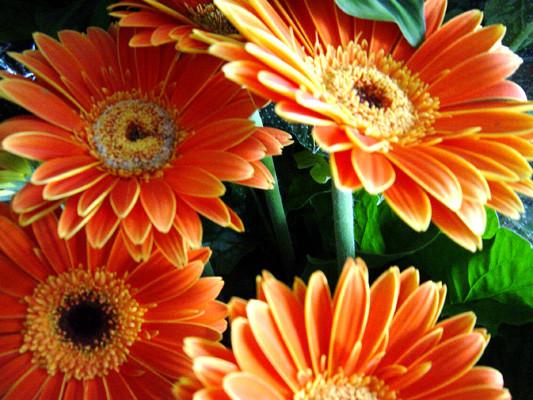 Flores bonitas y sus nombres car interior design for Plantas de interior fotos y nombres