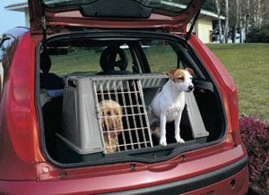viajar mascotas auto animales