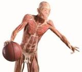 human bodies cordoba